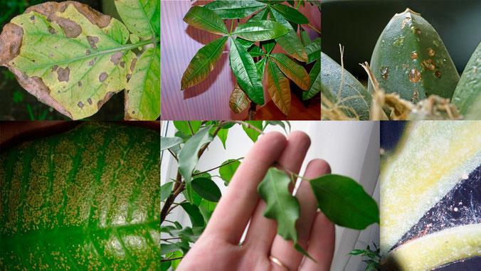 Лечение сада от грибковых заболеваний