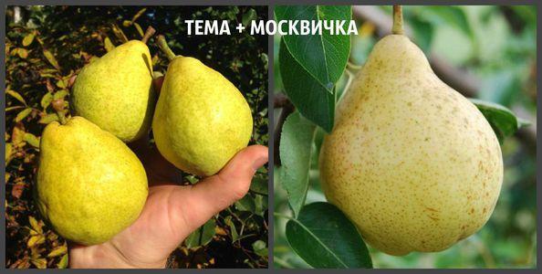 ТЁМА + МОСКВИЧКА