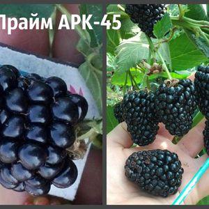 ЕЖЕВИКА ПРАЙМ АРК-45